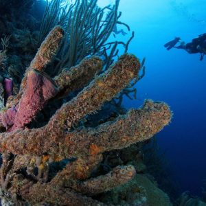 Dive Package for 4 Days of 2 Tank Boat Diving (8 Dives Total)